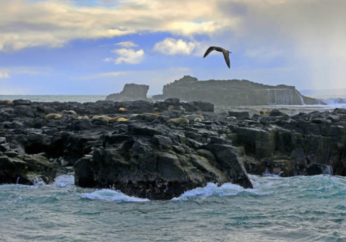 Seal Rocks - Phillip island