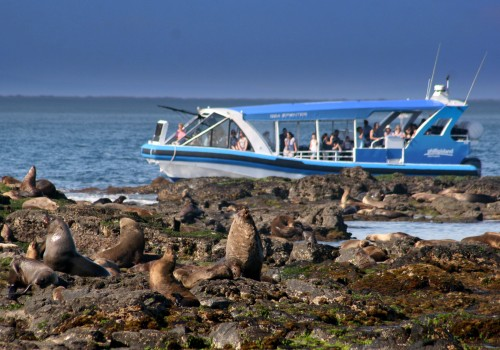Ecoboat tour to Seal Rocks