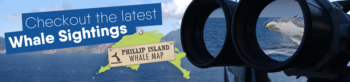 Whale Watching Map