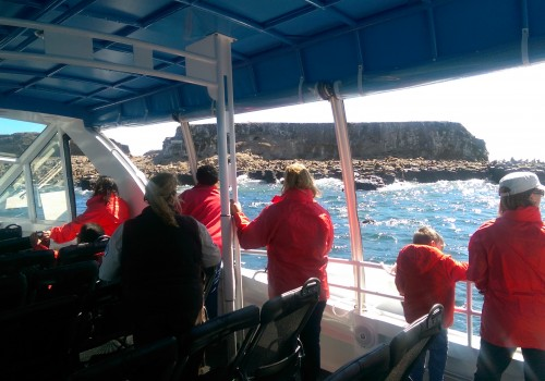 Ecoboat Tour