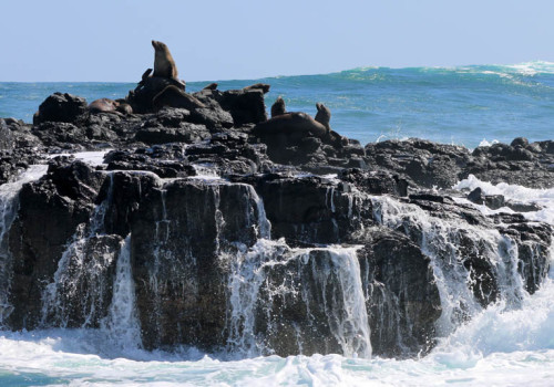 Seal Rocks - Phillip Island