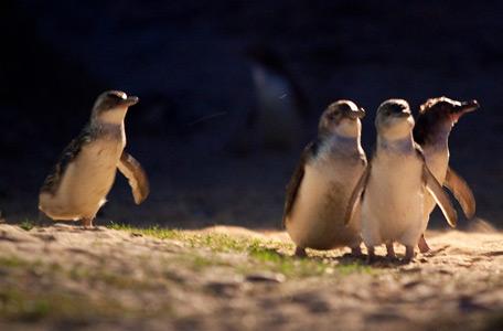 Penguins, Seals & PIE Pass