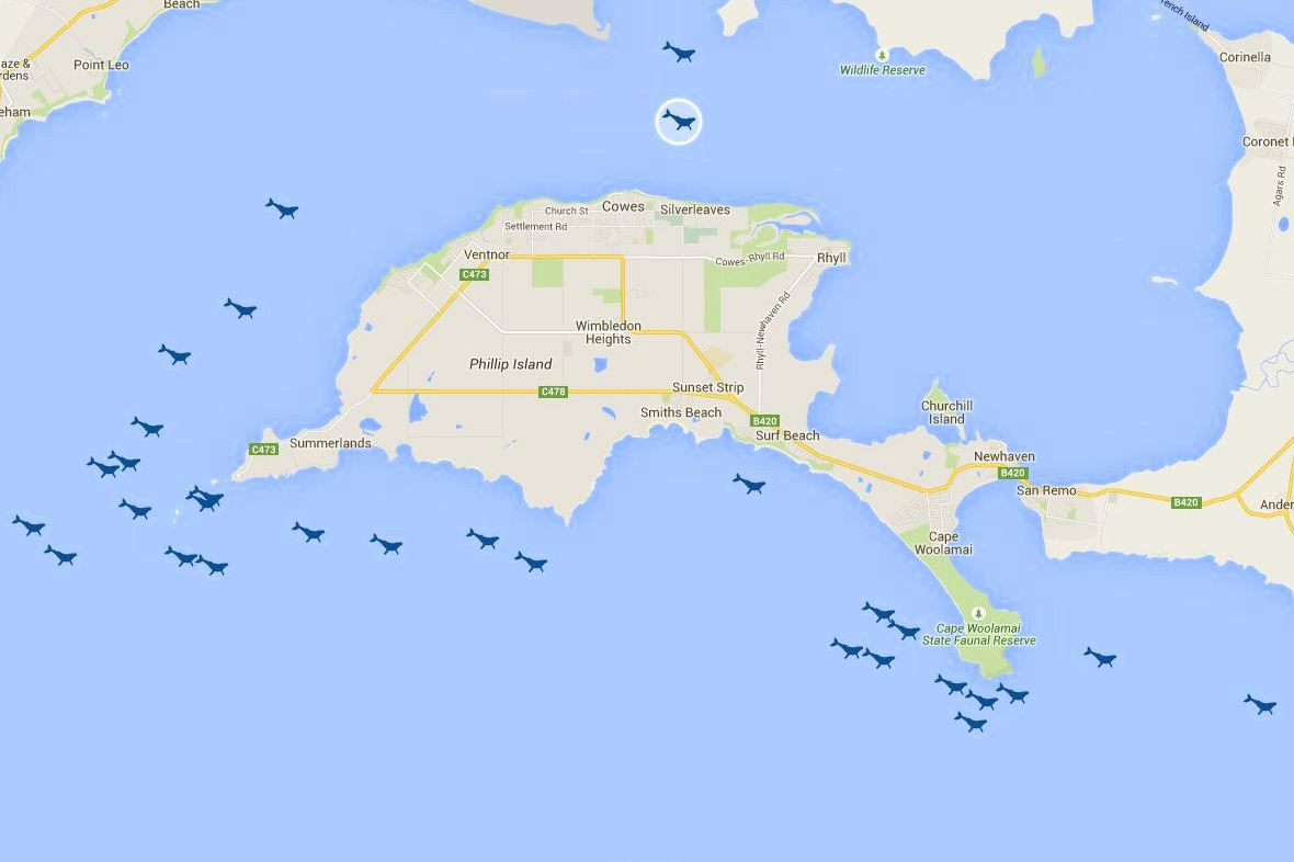 Whale sightings map