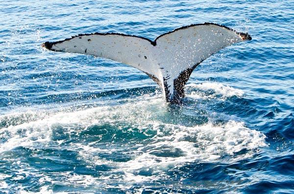 home-whale-2