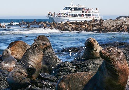 sealwatching-cruise