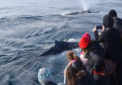 Whale Watching Phillip Island