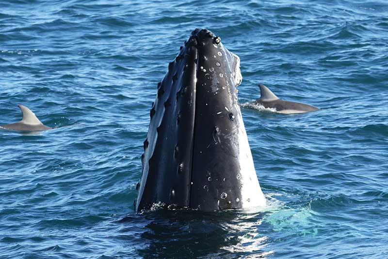 Dolphin & Whale Cruise