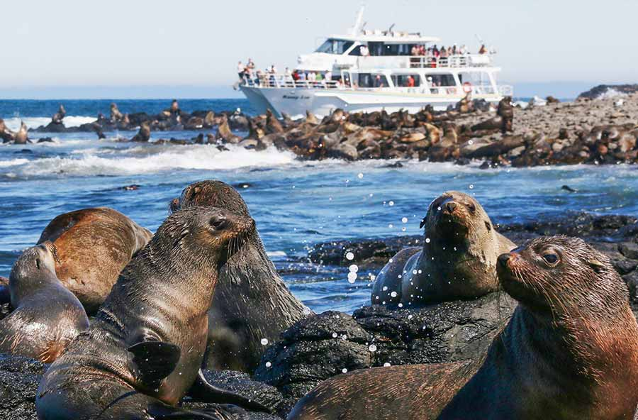 Seal Watching Cruise