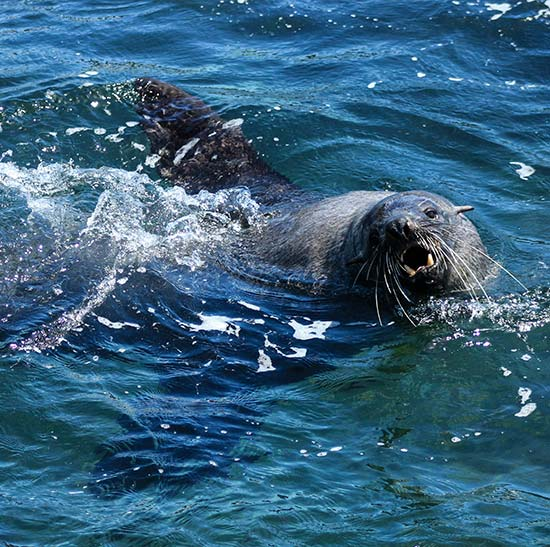 Bull Seal Spring